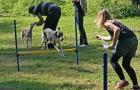 agility - sprung