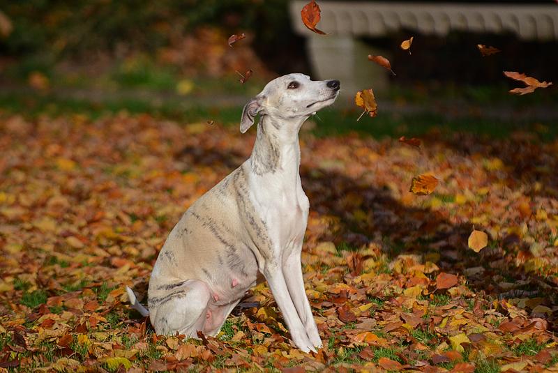 Herbstfreuden…