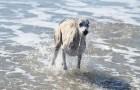 Joshi `11 im Wasser