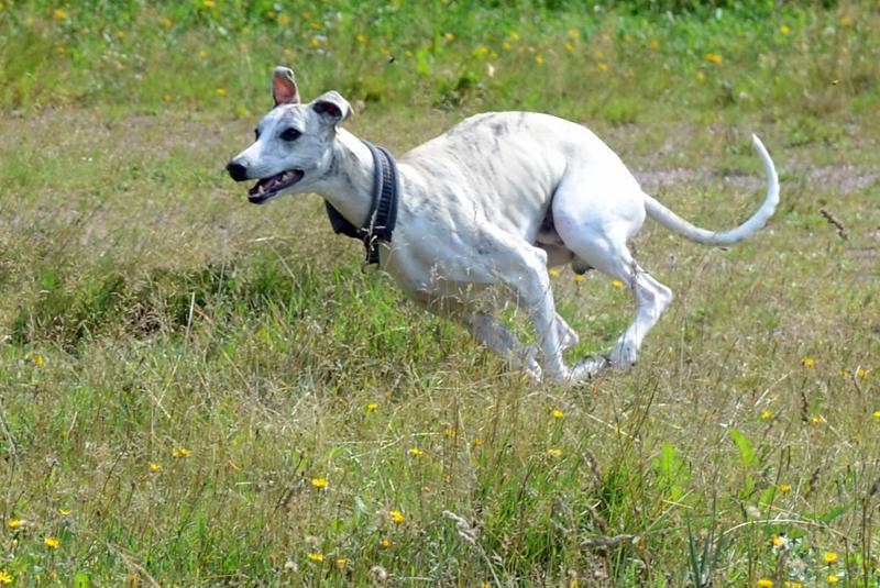Eddie running 1