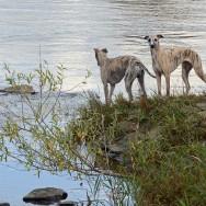 Gibbs und Lotte an der Weser