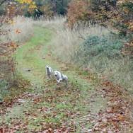 Herbstspaziergang 2