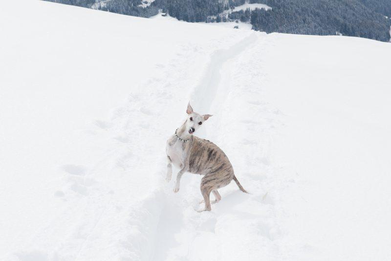 Camy Spiel im Schnee