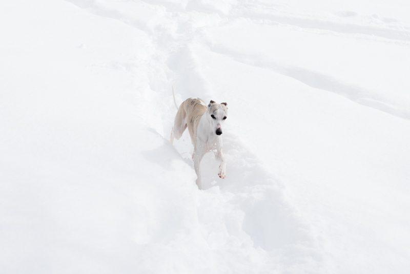 Lina Spiel im Schnee 2