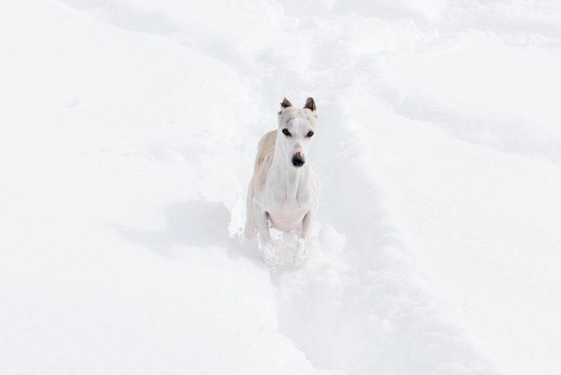 Lina Spiel im Schnee