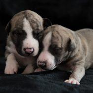 Zwillinge Rüde 1 und 4