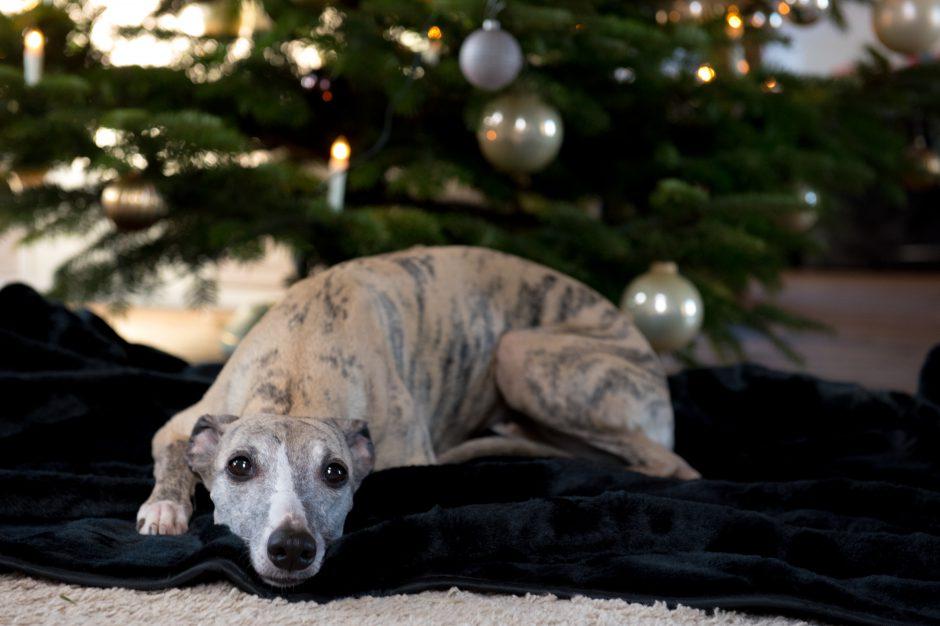 frohe Weihnachten und besinnliche Festtage…